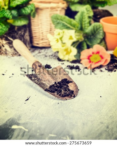 Summer gardening with scoop of soil , flowers pot and blooming, toned - stock photo