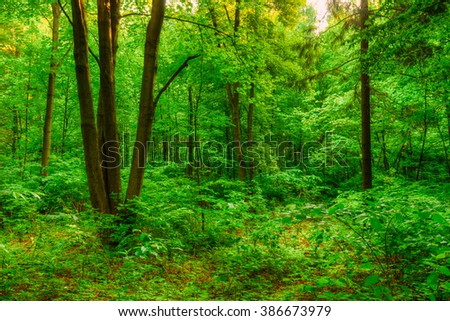 Summer Green Deciduous Forest Woods. Beautiful Nature
