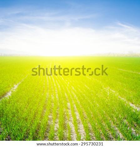 summer green field landscape - stock photo