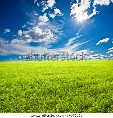 summer green field under the sun - stock photo