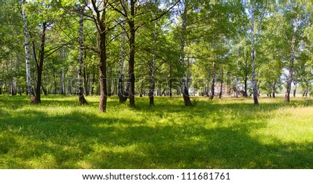 Summer green forest on sunny morning