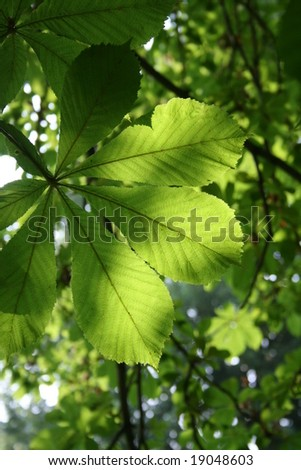 Summer green leaf