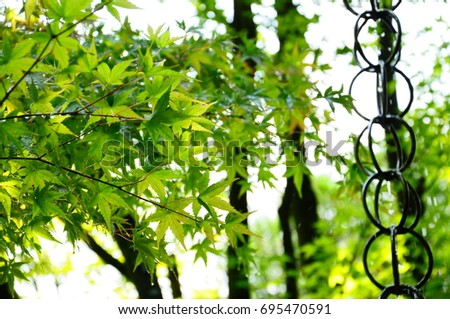 https://thumb7.shutterstock.com/display_pic_with_logo/167494286/695470591/stock-photo-summer-green-maple-695470591.jpg