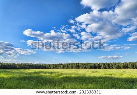Summer green meadow landscape forest - stock photo