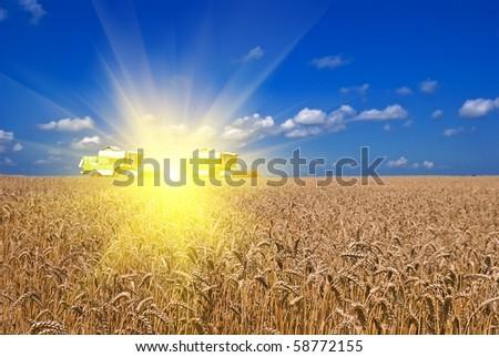summer harvest - stock photo