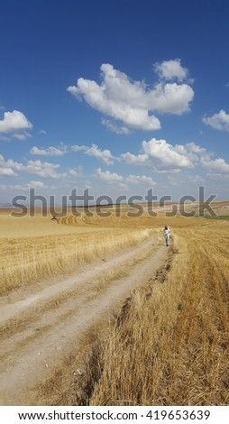 Summer Harvest in Anatolia