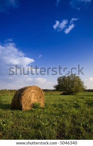 Summer hay bale  and tree in field  and blue sky - stock photo