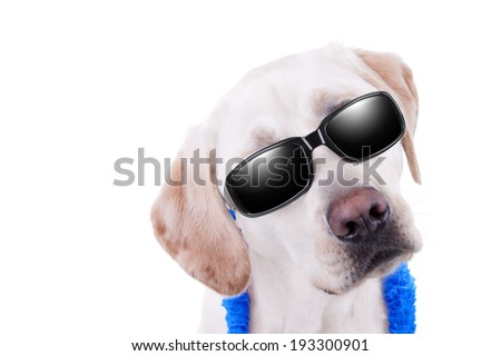Summer holiday vacation Labrador dog in sunglasses with copy space