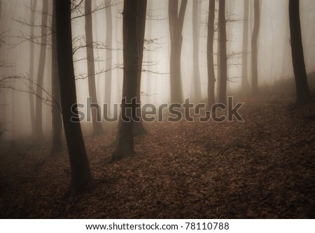 summer in a misty forest after rain - stock photo