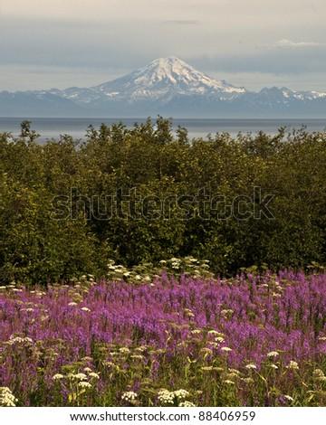 Summer in Alaska - stock photo