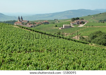 Summer in Beaujolais - Beaujolais landscape (France) - stock photo