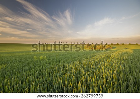 Summer in the fields - stock photo
