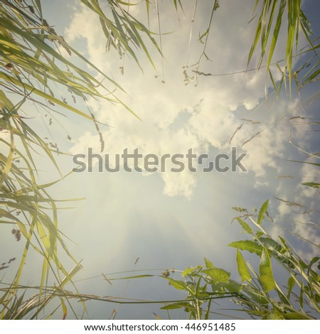 summer in the nature background