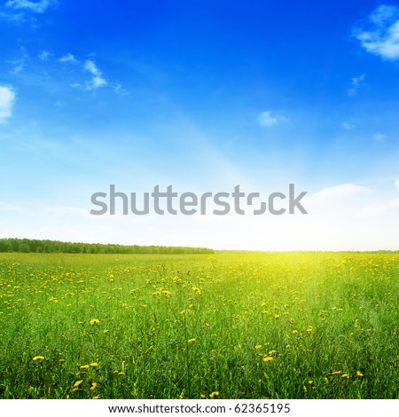 Summer landscape. - stock photo