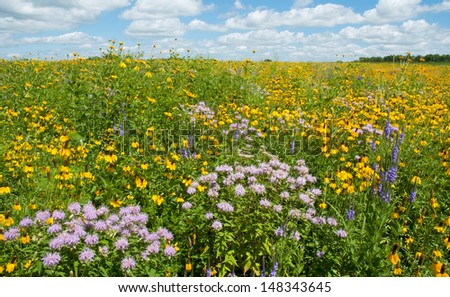Summer landscape: a prairie full of flowers, including prairie coneflowers, wild bergamot and blue vervain, also called blue verbena - stock photo