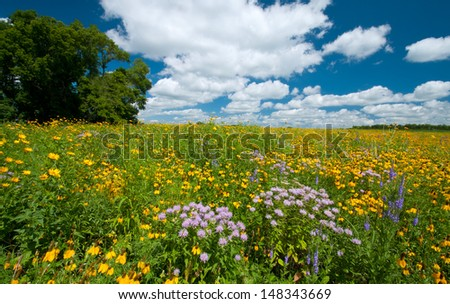 Summer landscape: a prairie full of flowers, with dramatic blue sky and clouds - stock photo