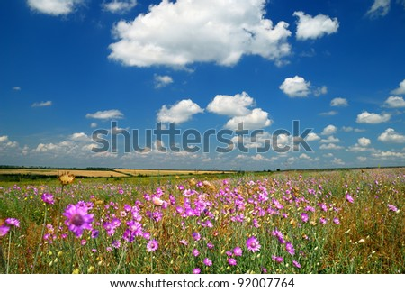 Summer landscape. Beautiful sky and pink wildflowers - stock photo