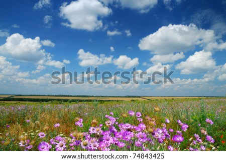 Summer landscape beautiful sky and wildflowers - stock photo