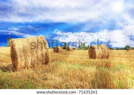 Summer landscape. Bright sun over green field with sheaves at summer.