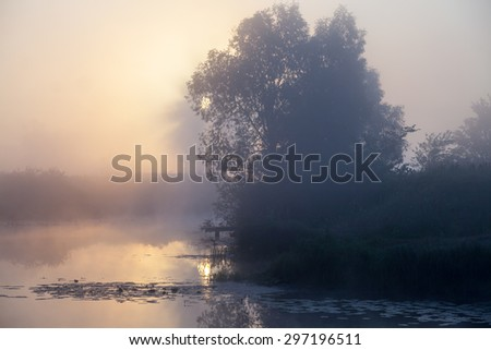 summer landscape dense fog in the oak grove near the river at dawn