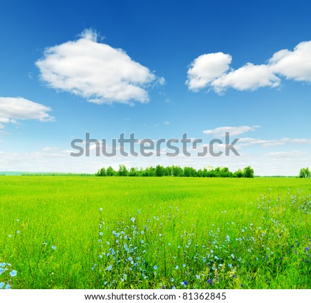 Summer landscape. Field and sky.