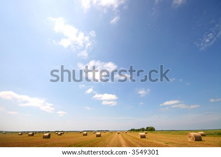 summer landscape field of hay bales - stock photo
