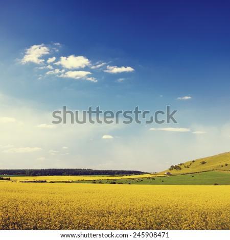 Summer Landscape Flowers Field Sky Grass Concept - stock photo