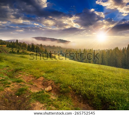 summer landscape. fog from conifer forest surrounds the mountain top in sunset light - stock photo
