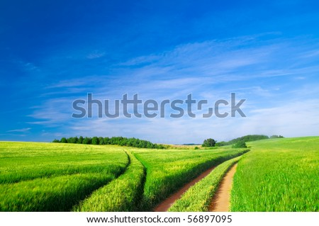 Summer landscape. Green field, trees and blue sky - stock photo