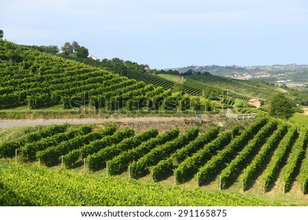 Summer landscape in Monferrato (Piedmont, Italy), with vineyards