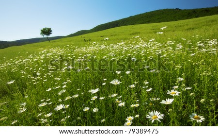 summer landscape is the field camomiles - stock photo