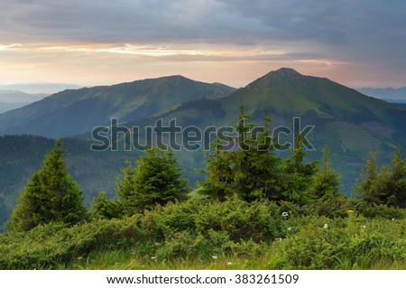 Summer landscape. Morning in mountains. Spruce trees on hill. Carpathians, Romania, Europe - stock photo
