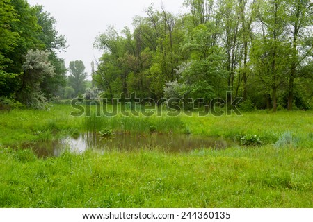 Summer landscape of a forest and small pond.  - stock photo