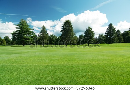Summer landscape of grass and pine trees