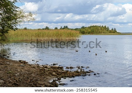 Summer landscape of lake Seliger in Tver region, Russia