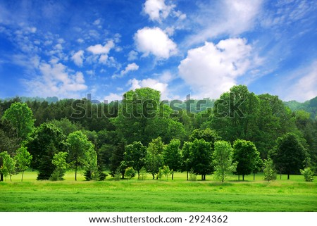 Summer landscape of young green forest with bright blue sky - stock photo