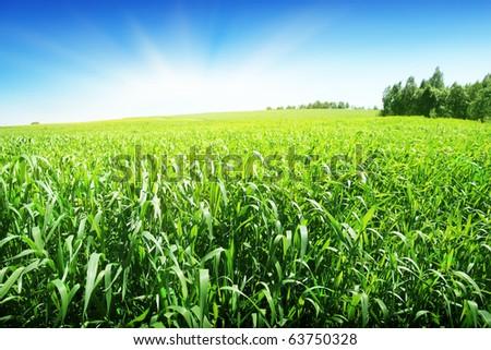 Summer landscape on sunny day. - stock photo