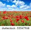 Summer landscape, poppy flowers filed and perfect blue sky. - stock photo