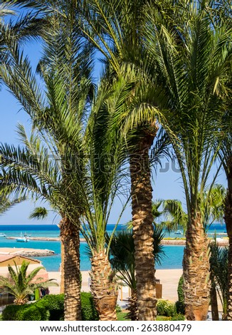 Summer landscape - shoreline with palms on a tropical beach. Resort vacation on a tropic beach of summertime.  - stock photo