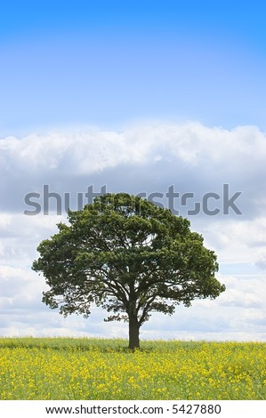 Summer landscape - single tree beneath a blue sky in a field of rapeseed - stock photo