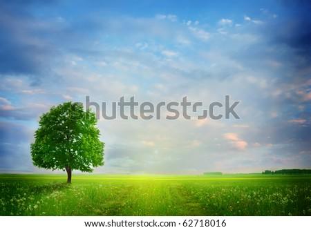 Summer landscape.Solitary tree on the dandelion field - stock photo