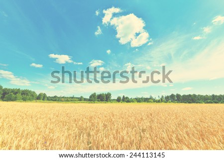 Summer landscape - Wheat field and blue sky with clouds - stock photo