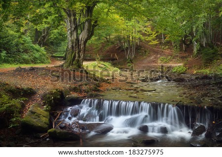 Summer landscape with a beautiful beech forest. Mountain stream with cascades. Carpathians, Ukraine, Europe - stock photo