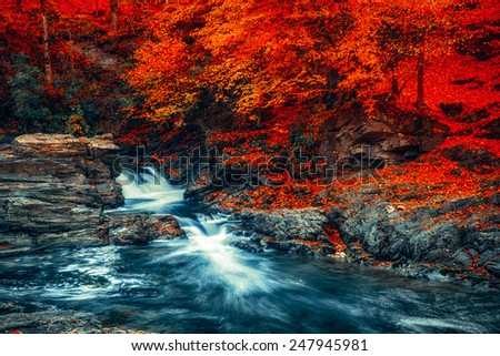 Summer landscape with a beautiful beech forest. Mountain stream with cascades. Soft effect. Color toning - stock photo