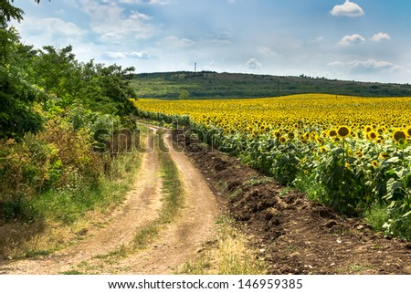 Summer landscape with a field of sunflowers, a dirt road and a tree - stock photo