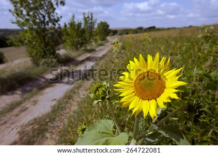Summer landscape with a field of sunflowers, a  road and  tree - stock photo