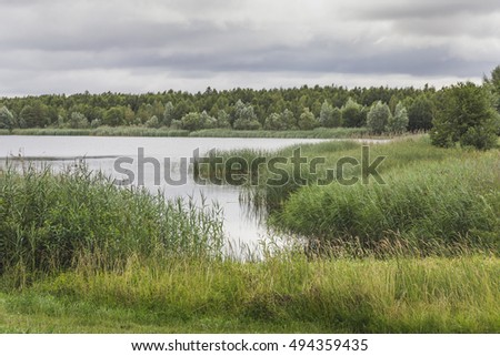 Summer landscape with a lake