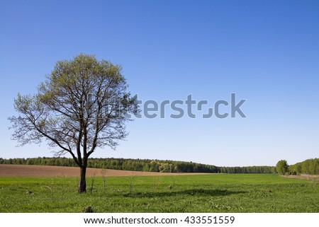 Summer landscape with a lonely tree on the plain.
