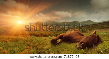 Summer landscape with a sleeping horse in the mountains. Sunrise - stock photo