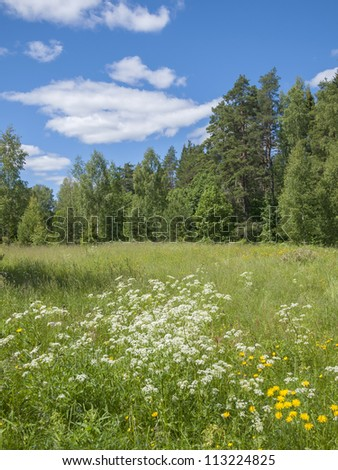 Summer landscape with a wood and a meadow.
